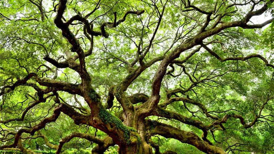 روز درختکاری روز نجات زمین