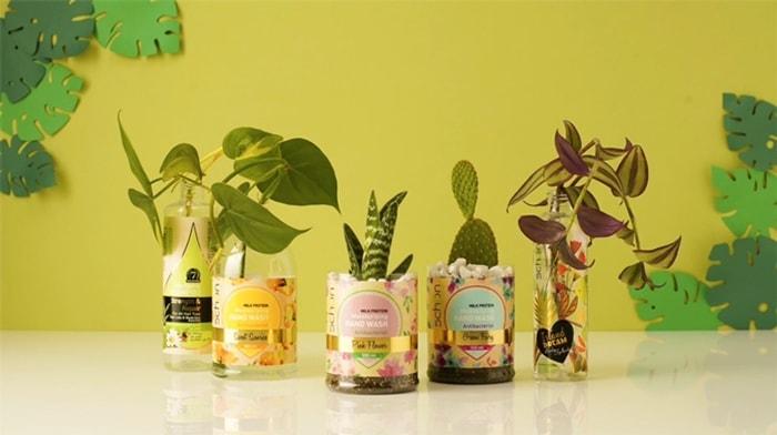 کاشت گل و گیاه در ظروف محصولات آرایشی و بهداشتی شون