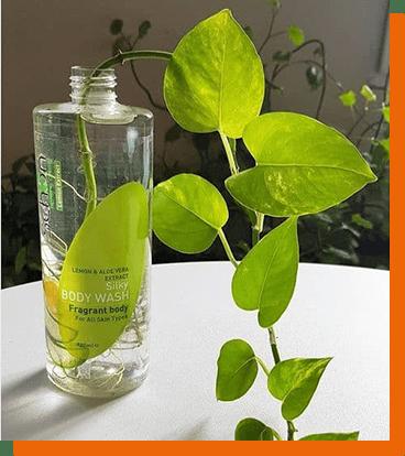 عکسهای خلاقانه شما از کاشت گل و گیاه ۱