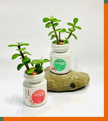 عکسهای خلاقانه شما از کاشت گل و گیاه ۲