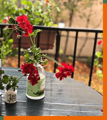 عکسهای خلاقانه شما از کاشت گل و گیاه ۳