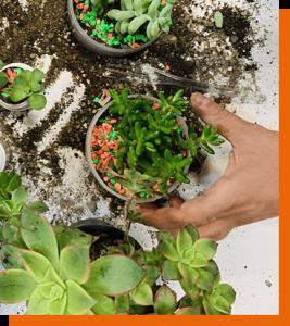 عکسهای خلاقانه شما از کاشت گل و گیاه ۴
