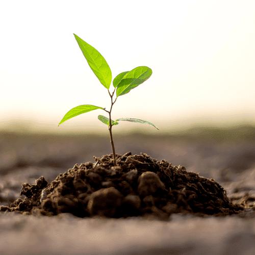 سه تاثیر مهم درختکاری برای حفظ طبیعت و زیبایی پوست